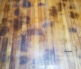 Severe Pet Stains On Oak Hardwood Floor