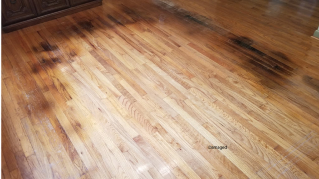 Dog Marks Area Rug and Stains Oak Floor