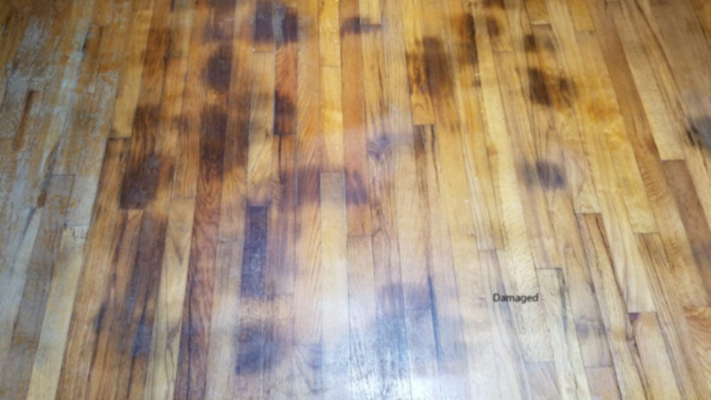 Pet Urine Stains On Hardwoods Medford House Gets Fixed